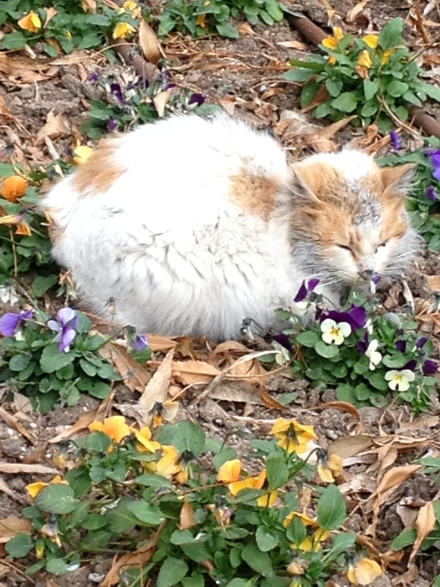 Even the feral cats just want a place to nap in the gardens of St. Anne's.
